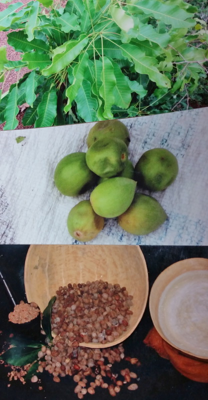 Shea leaves, fruits, and nuts